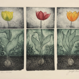 """""""Tri- Tulip"""""""