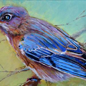 Backyard Bluebird by Pat Cross