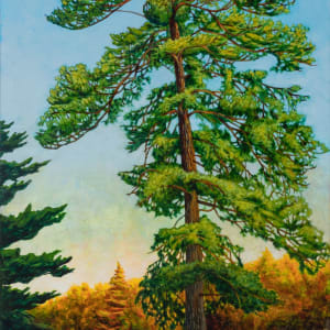 Great Pine by Melissa Jean