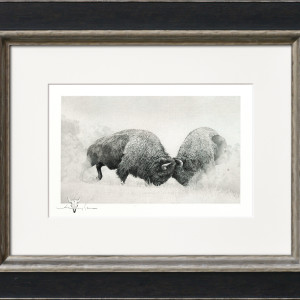 Bison Series
