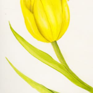 Yellow Tulip - 4pack Notecards