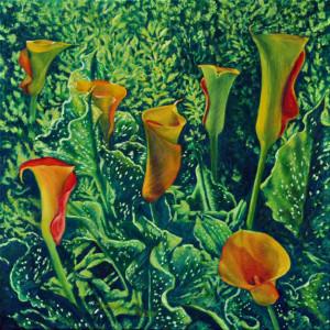 Callas from My Garden by Merrilyn Duzy