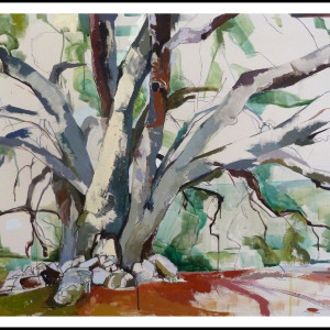 Paso Robles Oak (20130808)