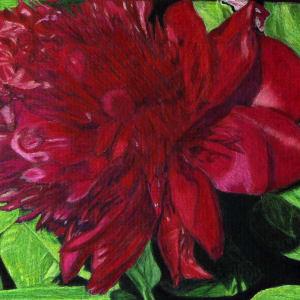 Utah Flower by Kathie Collinson