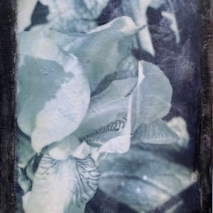 Black White Iris by Kathie Collinson
