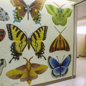 Minnesota Lepidoptera