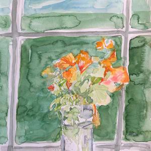 Window nasturtium