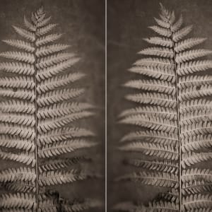 Interuppted fern by Kelly Sinclair