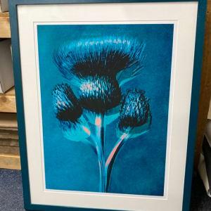 Plantstudie 5  50x37cm framed print 1 of 5 by caroline fraser
