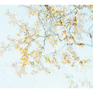 Arborescence 2  FRA039 by caroline fraser