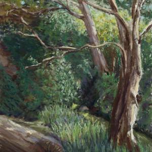 Noble Creek