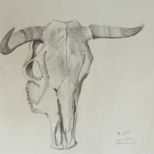 Steer Skull #1 by Cate Crawford and Wilson Crawford