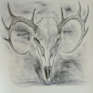 White Tail Skull #1 by Cate Crawford and Wilson Crawford