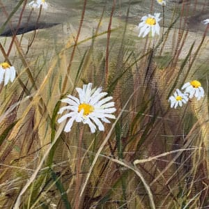 A Daisy a Day by Jennifer Peers