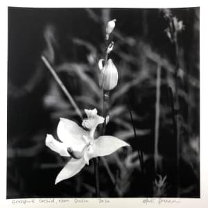 Grasspink Orchid, Nova Scotia