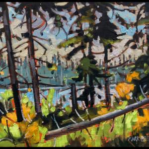 Wetland Beyond Speichts Lake, Nova Scotia by Mark Brennan