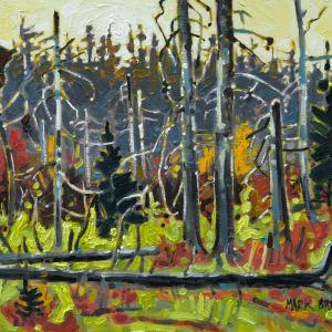 Spring Forest Wetland, Dalousie Mountain, Nova Scotia by Mark Brennan