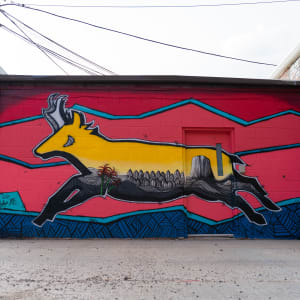 Antelope by Steve Knox and Josh Brady