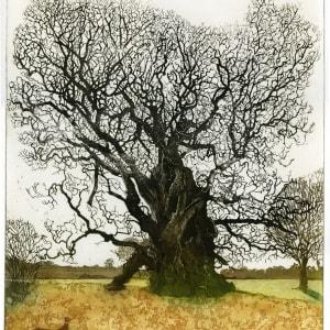 LON301, Majesty Oak a/p by Claire Longley