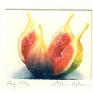 ENT019, Fig by Antonia Enthoven