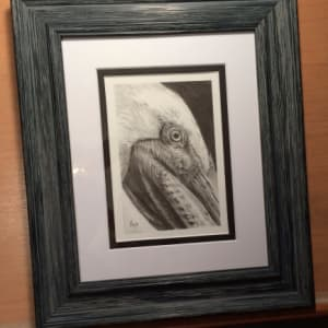 Brown Pelican study by Hope Martin