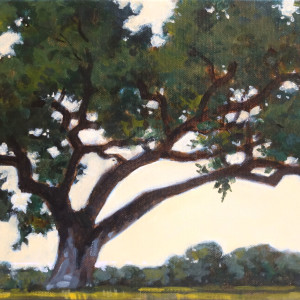 Heritage oak 8x16x