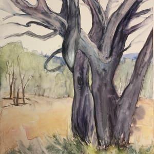 Twist of Tree by Holly Friesen
