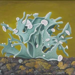 Leaf Lichen by Jane Troup