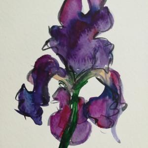 Proud Iris by Sonya Kleshik