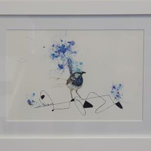 Superb Fairy Wren by Fabienne Golder