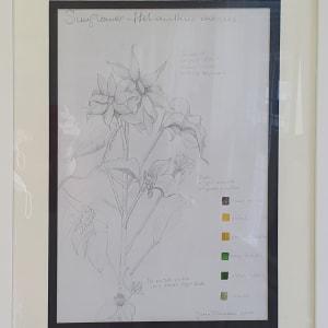 Sunflowers by Jan Owens