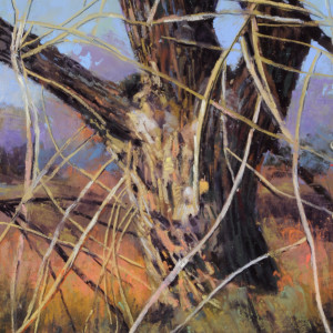 Tangled cottonwood nxrfrx