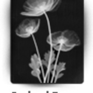 Iceland Poppy by Dr. André J.  Bruwer
