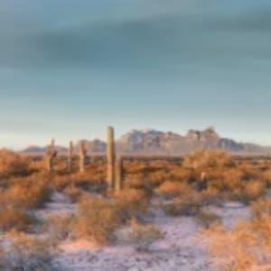 Under Sonoran Skies by Martin Baker