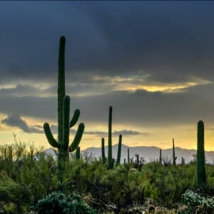 Winter Sunrise, Organ Pipe National Monument by Gregory E McKelvey