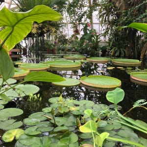 Stillness in Green by Antonio Milland Santiago