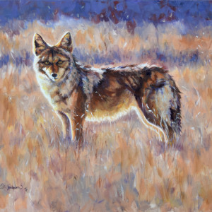 Winter coyote q8ruws