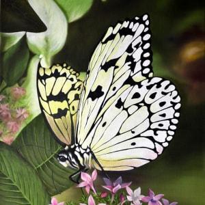 White Monarch