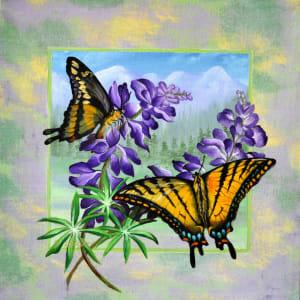 Mountain Swallowtail