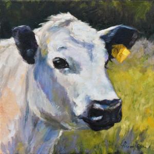 White steer web pqgmi1