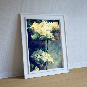 White Lilacs on a Wall