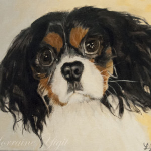 Leo the King Charles Cavalier