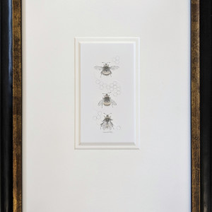 Buff tailed BumbleBee 3.20e