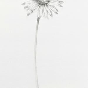 Mini Daisy by Louisa Crispin