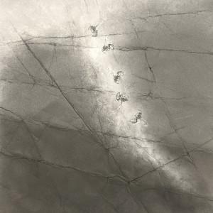 FlightPath xxxxix by Louisa Crispin