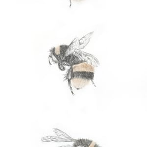 Buff tailed BumbleBee 3.30 by Louisa Crispin