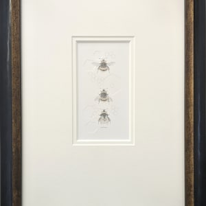 Buff tailed BumbleBee 3.27e by Louisa Crispin