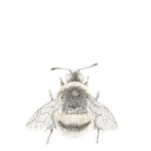 Buff tailed BumbleBee 3.26 by Louisa Crispin
