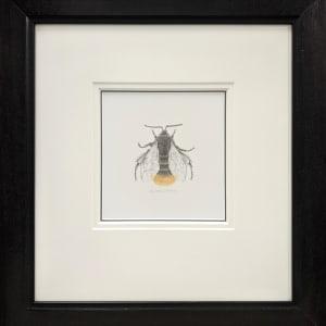 BumbleBee xi by Louisa Crispin