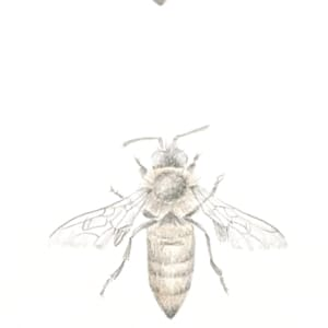 Honey Bee 3.24 by Louisa Crispin